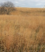 Wide Spread of Tall Grass