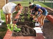 Creating a Garden