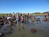 In the Hammonasset tide pools
