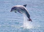 לפני שנתחיל.. אתם מוזמנים לשחק במשחק הדולפין....