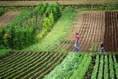 The sole purpose behind Organic Farming