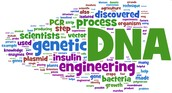 This week - Review for Genetics Test