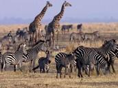 Dieren uit zuidafrika.
