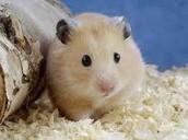 Venta de roedores