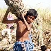 Boy Bonded Labourer in the Sindh Province