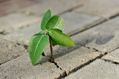 """Resilience is  """"bouncing back"""" from challenges."""