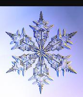 Snowflakes & families