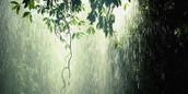 Rainy,