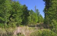 piney trees