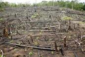 Deforestation in India