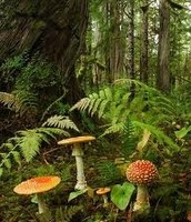 Mushrooms in a rain forest