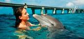 Swim with Dolphines