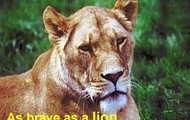 As brave as a lion!!