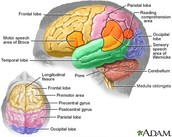 Linking Brain Structures and Functions