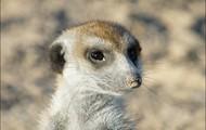Cute meerkats!!!