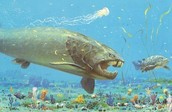 A shark from the Devonian Period