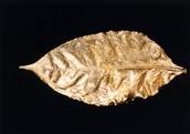 Gilded Leaf