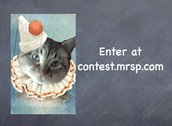 Teachers Read the Rules at my Contest Website to enter! Contest.Mrsp.Com