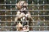 Animals Should Not be Kept in Zoos