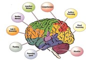 How is Executive Function diagnosed?