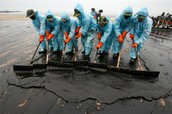 Many people helping with the oil spills