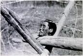 rape of nanjang