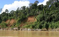 Amazon jungle, a tropical Rainforest