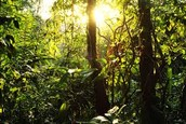 Who are the people of the Amazon and why should i care?