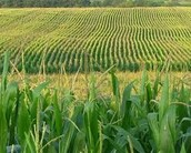 Food and Crops