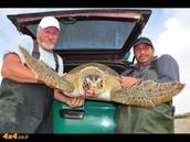 מצילים צבי ים