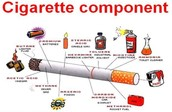 These are the components that make up a cigarette.