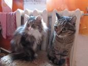 Вася и Томас