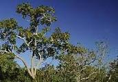 THE BRAZIL CERRADO SAVANNA