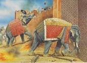 War elephants!