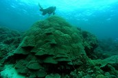 Australia waste dumping on Great Barrier Reef