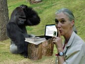 monkey on the computer