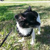 My Dog Missy