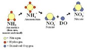 Nitrification or Ammonification