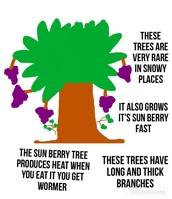 Sun berry tree