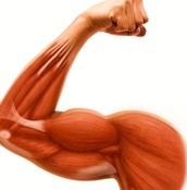 keep your muscles healthy