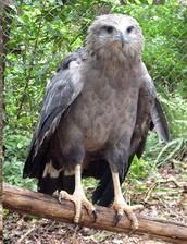 Una especie amenazada que protege a toda la flora y la fauna de su región.
