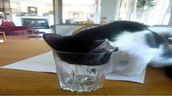 cat head in cup