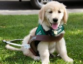 http://guidedogs.blogspot.com/2013/12/alumni-connections-in-gratitude-gift-of.html
