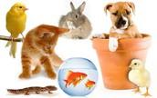 Los animales que tenemos