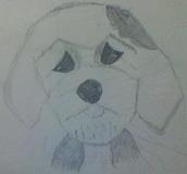 Sketched Sheepdog