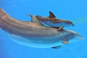 Baby dolphines