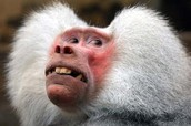 Since I could not find anymore people that I like who persevered decided to put this picture of a monkey