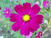 Flower Sale Information . . .