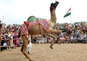 Pushkar Fair 2013