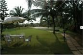 Lush Green Open Garden